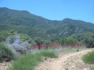annabarr: Sespe Wilderness, Los Padres NF - May 14-15, 2005 &emdash; flowers1