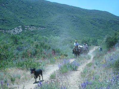 annabarr: Sespe Wilderness, Los Padres NF - May 14-15, 2005 &emdash; pack-trip